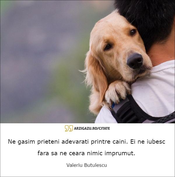 citate caini Ne gasim | Arzi Gazu'   Informatii necesar de inutile citate caini