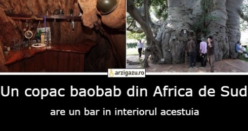 Un copac baobab din Africa de Sud are un bar in interiorul acestuia