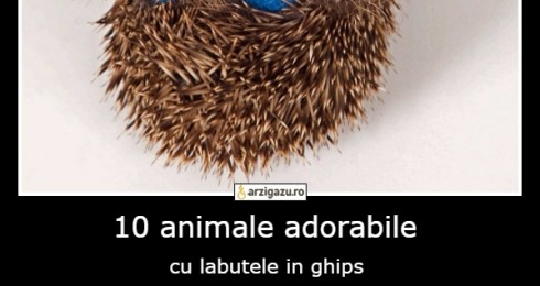 10 animale adorabile cu labutele in ghips